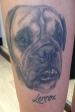 Healed black and grey bulldog thigh tattoo